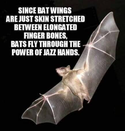 Bat Jazz hand Flight